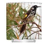 New Holland Honey-eater Shower Curtain