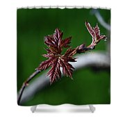 New Leaves Shower Curtain