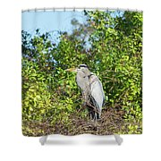 New Nest For Great Blue Heron Shower Curtain