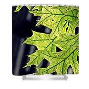 New Oak Leaves    Shower Curtain