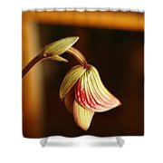 New Orchid Shower Curtain