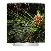 New Pine Cone Shower Curtain