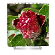New Red Hibiscus Shower Curtain
