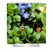 New Season For Bellis Perennis Bellissima Red Shower Curtain