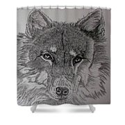 Wolf. Shower Curtain by Cynthia Adams