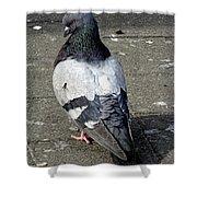 New York City Pigeons # Shower Curtain