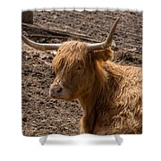 New Zealand Cow Shower Curtain