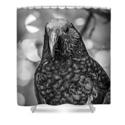 New Zealand Kaka Shower Curtain
