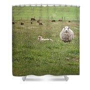New Zealand Sheep Shower Curtain
