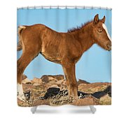 Newborn Colt Shower Curtain