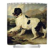 Newfoundland Dog Called Lion Shower Curtain by Sir Edwin Landseer