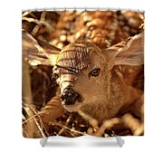 Newly Born Fawn Hiding In A Saskatchewan Field Shower Curtain