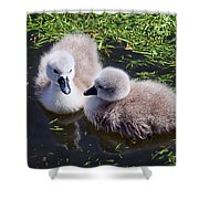 Newly Hatched Cygnets At Abbotsbury Shower Curtain