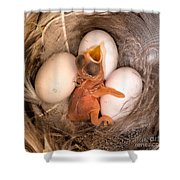 Newly Hatched Tree Swallow Shower Curtain