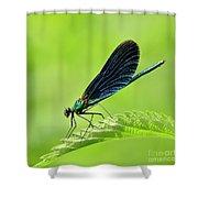 Beautiful Demoiselle Damselfly Shower Curtain
