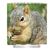 Nibbling Shower Curtain