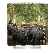 Nick Loading Cattle Shower Curtain