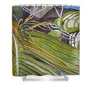 Nick's Coconuts Shower Curtain