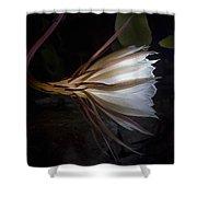 Night Blooming Cereus Shower Curtain