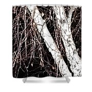 Night Branches Shower Curtain