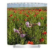 Night Flowering Catchfly And Poppies Shower Curtain