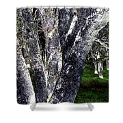 Night Grove Shower Curtain