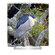 Night Heron Shower Curtain