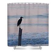 Night Heron Dawn Post Shower Curtain