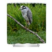Night Heron On Slim Branch Shower Curtain