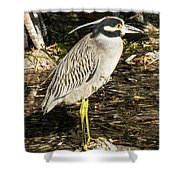 Night Heron Standing On A Rock In Key West Shower Curtain