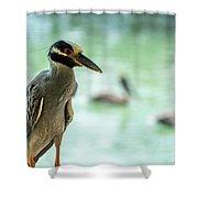 Night Herons Shower Curtain