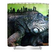 Night Of The Iguana Shower Curtain