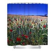 Night Poppies Shower Curtain