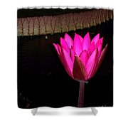Night Time Lily Monet Shower Curtain