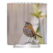 Nightingale Shower Curtain