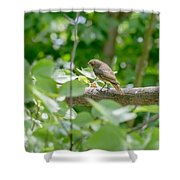 Nightingale In The Wood Shower Curtain