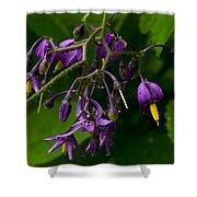 Nightshade Wildflowers #5607 Shower Curtain