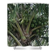 Niu Ola Hiki Coconut Palm Shower Curtain