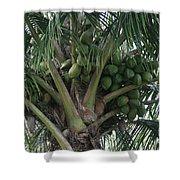 Niu Ola Hiki Coconut Palm Shower Curtain