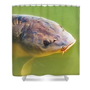 No Bread Today Shower Curtain