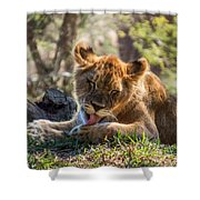 Lion Cub Lick Shower Curtain