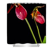 No Lady Slipper Was Harmed Shower Curtain