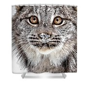 No Mouse This Time Shower Curtain
