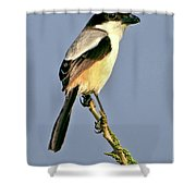 Philippine Falconet Shower Curtain