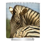 No Tailgaiting Shower Curtain