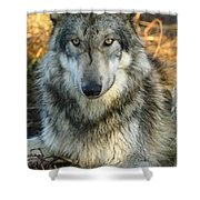 Noble Lupine Shower Curtain