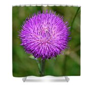 Nodding Thistle Close-up Shower Curtain