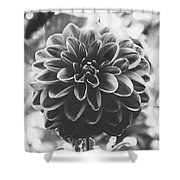 Noir Dahlia  Shower Curtain