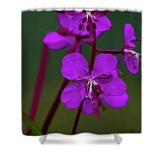 Nome, Ak 32 Shower Curtain