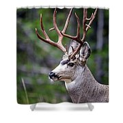 Non-typical Mule Deer Buck Portrait. Shower Curtain